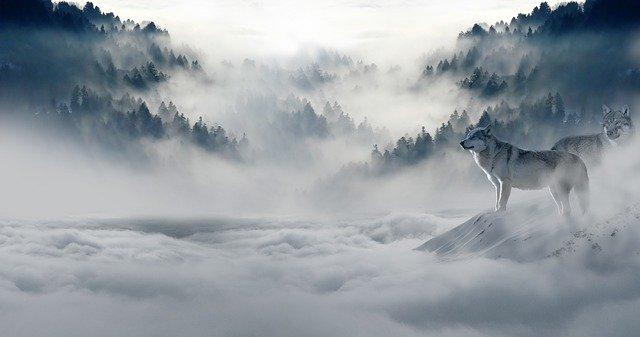 vlk v oblacích