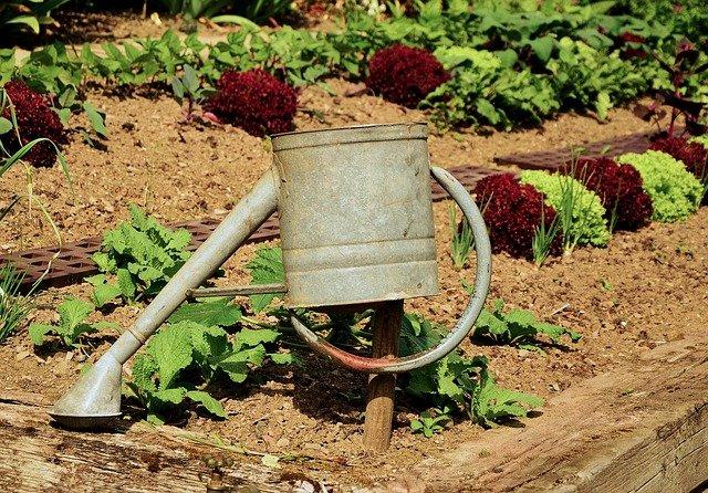 zelenina v záhoně